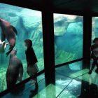Nausicaa : Aquarium of Boulogne sur mer